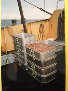 Nordland 2002: Frische Krabben in Kisten